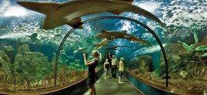 Loro Parque - akvária